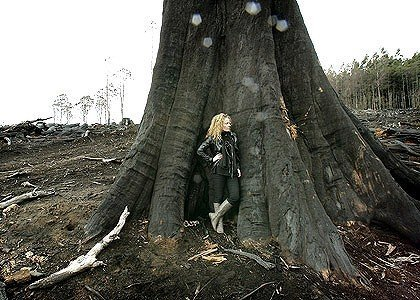Sarah Rees at the base of an ancient mountain ash spared the chainsaw but killed during a clean-up fire near Toolangi. She says the present situation is an emergency. Photo: John Woudstra