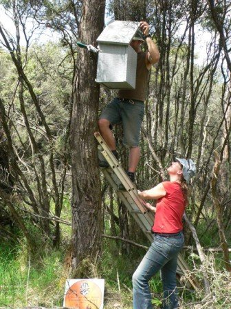 Volunteers checking a nest box for Leadbeater's Possums. Photo: Joanne Antrobus.