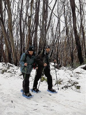 Snowy trek: Emma-Kate Campbell and Tony Schnaedelbach make the journey to feed possums.